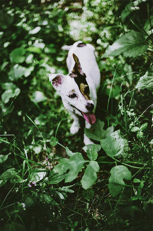 Best CBD Products for Pets - Fauna Pet CBD - Picture of a dog walking through nature
